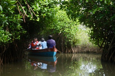 Boat ride in the Mangrove forest