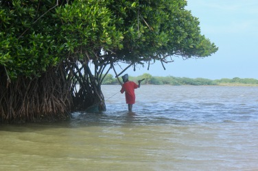 A fisherman looking for crabs in the swamp